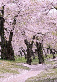 Goryokaku Park, Hokkaido, Japan, uncredited