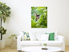 Hummingbird Stretched Canvas Art Print. Museum quality fine art canvas print with mirrored sides. Print size: 8x10x1.5, 11x14x1.5, 16x20x1.5, 20x24x1.5 or 24x36x1.5. Orientation: vertical.  Title: Peaceful Love Hummingbird  Hovering hummingbird on green background with white flowers. Hummingbird stretched canvas print, premium glossy canvas stretched on a wooden frame 1.5 x 1.5 with mirrored sides. Ready to hang with pre-attached hanging wire, mounting hooks, and nails. • VIEW MORE CANVAS…