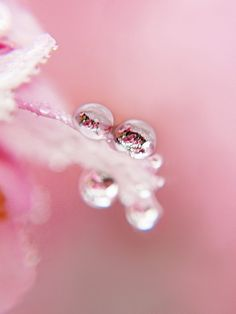 raindrop reflection