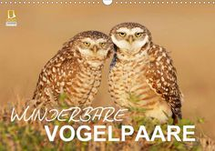Wunderbare Vogelpaare - CALVENDO Kalender von birdimagency.com -  #calvendo #calvendogold #kalender #fotografie #voegel #vogel #tierfotografie