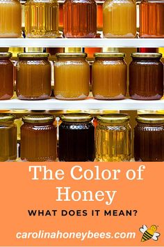 Why does honey come in so many different colors?  Which color of honey is best?  #carolinahoneybees #honeycolor #rawhoney Raw Honey, Honey Bees, Types Of Honey, Beekeeping For Beginners, Honey Benefits, Best Honey, Honey Recipes, Honey Colour, Save The Bees