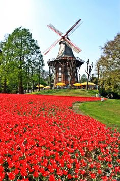 The windmill with different flower every year