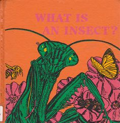 """""""What is an Insect?"""" by Jenifer W. Day, illustrated by Dorothea Barlowe (1976)"""