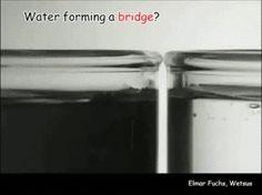 Chemical GIFs Water Bridge