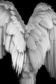 Image shared by mandy. Find images and videos about white, angel and wings on We Heart It - the app to get lost in what you love. Angels Among Us, Angels And Demons, Wings Of Angels, Fallen Angels, Funny Bird, I Believe In Angels, Ange Demon, Guardian Angels, Angel Art