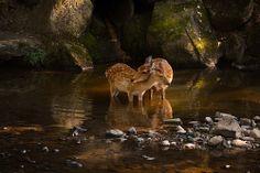 Love and Reflections! | Flickr – Compartilhamento de fotos!