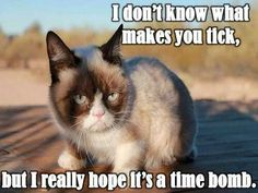 Grumpy cat.. time bomb. Hahahaha
