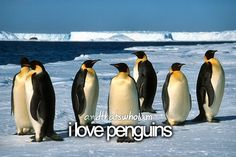 I love penguins!!!