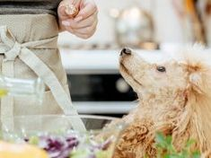 3 Tips On How To Make Dog Food Cheaply On A Budget Make Dog Food, Best Dog Food, Homemade Dog Food, Dog Ear Infection Treatment, Dogs Ears Infection, Home Remedies For Fleas, Flea Remedies, Natural Remedies, Olive Oil For Dogs