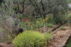 A Perfumer's Garden in Grasse by L'Occitane, designed by James Basson, built by Peter  Dowle
