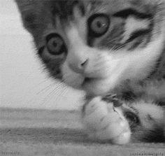 La loca de los Gatos - Página 11