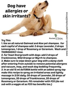 Homemade Dog Food Recipes For Dogs With Skin Allergies