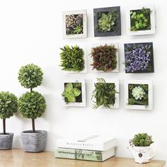 succulent plants wall - Google Search