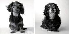 Fotógrafa mostra envelhecimento de cães ao clicá-los desde filhotes até ficarem idosos