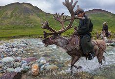 mongolian reindeer herders - Google Search