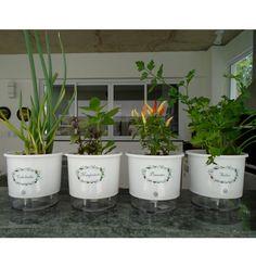 O Kit Horta Autoirrigável foi concebido para que você tenha em sua cozinha os temperos que vocês gosta, sempre fresquinhos, otimizando seu tempo nos cuidados com rega e higiene, e com segurança contra o mosquito da dengue. Com as etiquetas de identificação, você evita confusão de temperos e deixa seus vasos mais bonitos.  O Kit Horta Autoirrigável é composto por:  4 Vasos Autoirrigáveis Médios (Altura Exterior: 14 cm, Altura interna: 11 cm, Diâmetro Superior: 16 cm, Diâmetro Inferior: 14…