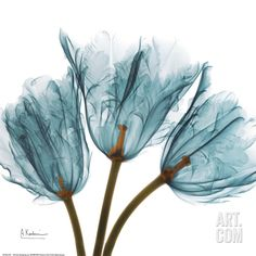 Tulips in Blue Art Print by Albert Koetsier at Art.com
