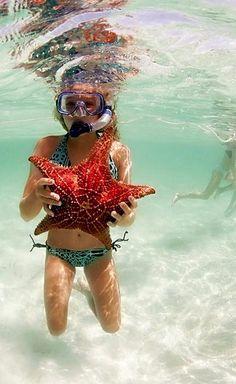 Starfish..
