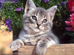 cats - Pesquisa Google