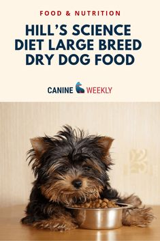 Hill's Science Diet Large Breed Dry Dog Food is a specialized food that will be able to give your pup the nutrition and benefits your dog needs to be happy and healthy,, This dog food was developed by a veterinarian and has a wide variety of conditions your pup may have—everything from bladder health to skin conditions, to diabetic formulas. Click here to learn more about this dry dog food for a large breed. #canineweekly #drydogfoodbrands #foodforlargedogs #dogfoodforlargedogs #dogfood Happy Dog Food, Happy Dogs, Canned Dog Food, Dry Dog Food, Dog Treat Image, Hills Dog Food, Hills Science Diet, Dog Food Reviews, Diy Dog Treats