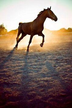 Con cappuccio Pullover//Hoody Grigio cavalli animali /& Natura Motivo Modello Cavalli