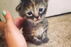 Purrmanently Sad Cat: The adorable kitten that will break your heart