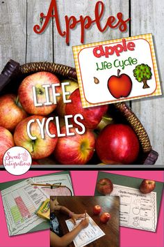 Kindergarten and first graders can learn about the life cycle of apples with a PowerPoint, hands on investigations, and graphing. Apple themed gameboards are provided, too! $