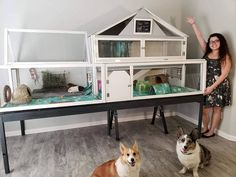 Our newly finished custom built x guinea pig cage! Cat and dog proof :) Bunny Cages, Rabbit Cages, Dog Cages, Pet Cage, Guinea Pig Hutch, Guinea Pig House, Pet Guinea Pigs, Bunny Hutch, Indoor Guinea Pig Cage