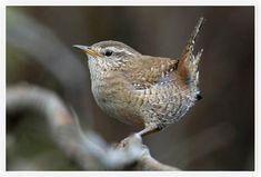 Observatoire des oiseaux des jardins | Vigie Nature