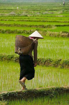 farmer in the rice field near Sapa Vietnam Laos, Vietnamese Dong, Asia Continent, Beautiful Vietnam, Vietnam History, Art Asiatique, People Of The World, Vietnam Travel, Southeast Asia