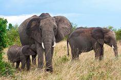 elfoton14 #categoría #Fauna En el Concurso de Fotografía Elfoton.es tenemos 9 categorías para que todo el mundo encuentre la suya. #Instagram #sinfiltros Participa hasta 15 de  julio en http://elfoton.com Usuario: jero (España) - Familia - Tomada en Masai Mara / Kenya el 29/08/2012