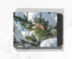 Need inspiration for green home wall decor? How about winter evergreens? If you love winter snow, this pinecone nature print will be a unique addition to your winter decor. Order a gallery wrapped canvas art print today at https://rogueauroraphotography.com/wall-art-shop/winter-pinecones.