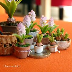 Oiseau deNim // mini garden
