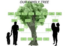 How To Draw A Genogram In Microsoft Word 2007 Make Family Tree Diagram Thumbnail