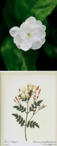 Jasmine Flower floral shoulder piece