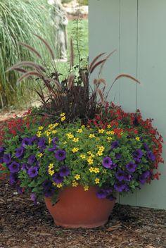 Purple fountain grass, petunia, nemesia, and bidens.