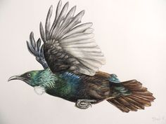 Another version of the Flying Tui - WildLight Photography Tui Bird, Bird Artists, Paper Collage Art, New Zealand Art, Pencil Drawings, New Art, Painting & Drawing, Carving, Birds