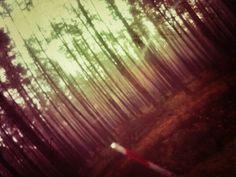 Prędkością gięty las.