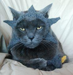 International Cat Hat: USA by wildtomato, via Flickr