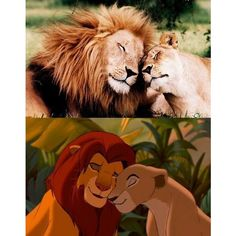 Lion King In Real Life! (Pics) :: FOOYOH ENTERTAINMENT ❤ liked on Polyvore featuring disney and animals