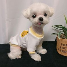Cute Baby Puppies, Super Cute Puppies, Cute Babies, Cute Little Animals, Cute Funny Animals, Cute Cats And Dogs, Animals And Pets, Cute Creatures, Pet Clothes