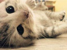 Adorable Little Baby Kitten - I want!