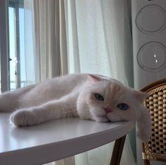 Wake up like sunday Cute Funny Animals, Cute Baby Animals, Animals And Pets, Cute Cats, Funny Cats, Puppies And Kitties, Kittens Cutest, Cats And Kittens, I Love Cats