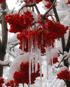 trendy Ideas for flowers winter nature snow Winter Images, Winter Pictures, I Love Winter, Winter Time, Winter Snow, Winter Scenery, Snow And Ice, Winter Beauty, Winter Photography
