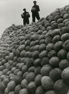 Manufacturing process of sauerkraut, Heart CO., Oudkarspel, Netherland, 1939 Wiel van der Randen