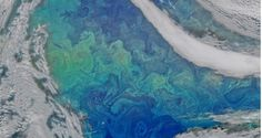 Water Art: NASA Image of Phytoplankton Goes Viral.....It may look like a painting by Vincent van Gogh, but this mass of swirling colors is really a satellite image depicting a huge bloom of phytoplankton, or microscopic marine plant life, in the waters of the North Atlantic Ocean. -