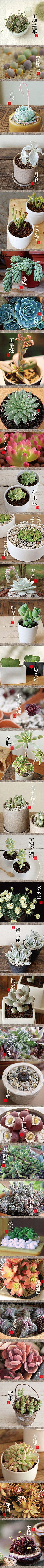 The Wolf Cub & Lucy : thewolfcub.com - Cacti and Succulents