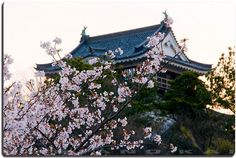 I'd love to visit this place next year:  Okazaki Castle is located in Okazaki, Aichi Prefecture, Japan. About an hour from Nagoya.  At the end of the Edo period, Okazaki Castle was home to the Honda clan, daimyō of Okazaki Domain, but the castle is better known for its association with Tokugawa Ieyasu and the Tokugawa clan.  It is a great place to enjoy Cherry Blossoms and Chu-hai! =)