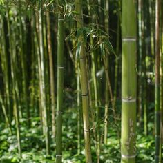 Bamboo @ Jnane Sbil Gardens #Fez #Fes #maroc #morocco #travel #voyage #tourisme #magazine #ipad #nowmaroc