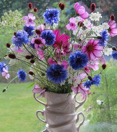Flower Garden : Photo
